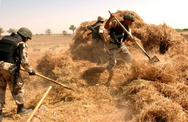 Army in the haystack